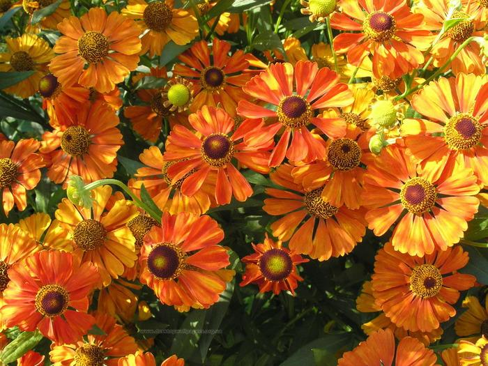 Цветок оранжевый фото 2