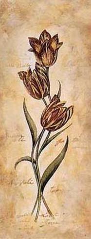 steve-leal-tulip (187x488, 32Kb)