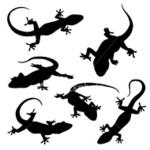 Превью бЄаЇ-ist2_3586727-gecko-silhouettes (380x380, 32Kb)