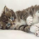 Превью kittens_3 (150x150, 8Kb)