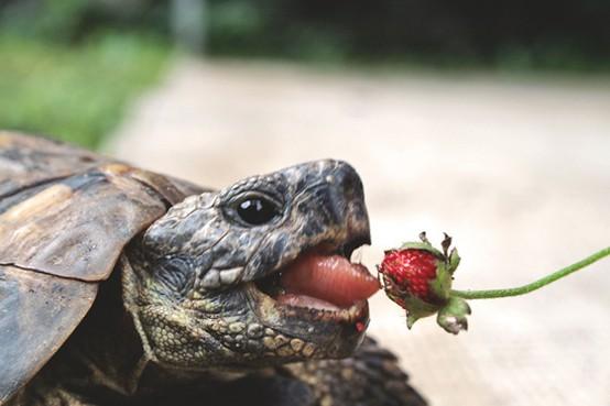 Очаровательные подарки природы