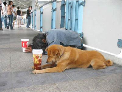 3463295_homeless (400x300, 31Kb)