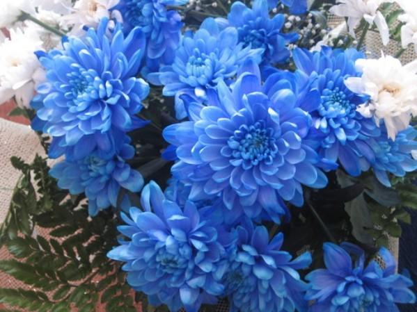Синие (599x449, 86Kb)