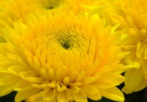 Желтый (603x418, 45Kb)