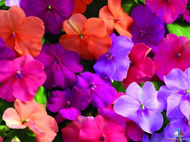 разбитое сердце фото цветов: