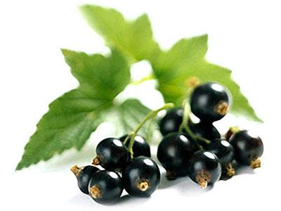 листья черной смородины (400x300, 20Kb)