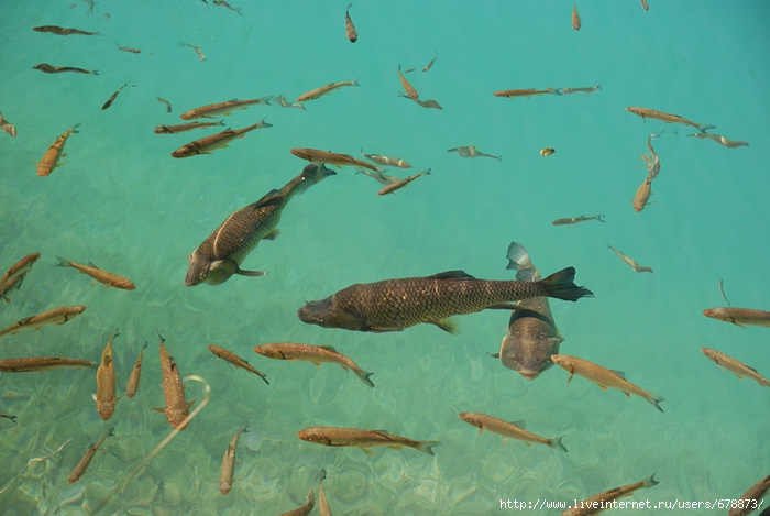 как ловить рыбу в чистой воде
