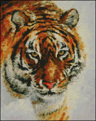 3971977_TIGER_ON_THE_SNOW