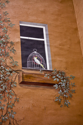Попугай в окне