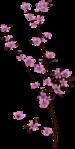 Превью Missy_sp_blossom2 (351x700, 146Kb)