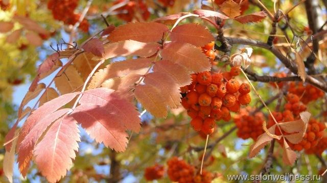 осенние листья с рябиной (640x360, 84Kb)