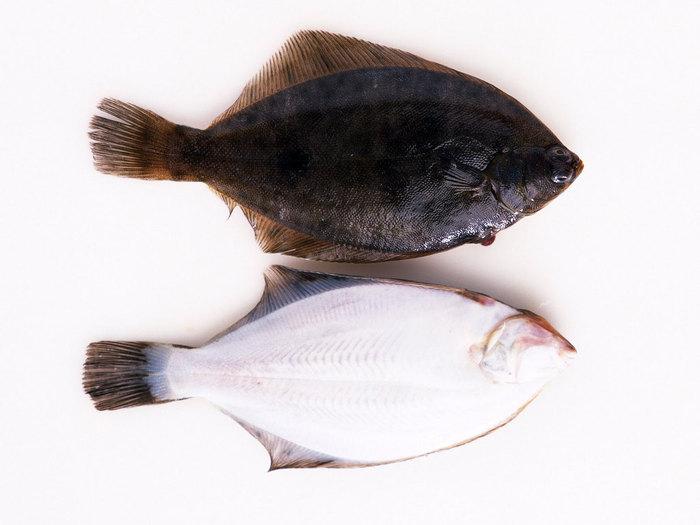 Рыба флаундер фото 6