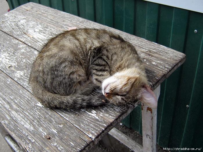 сытый спящий котёнок, 2 (700x525, 326Kb)
