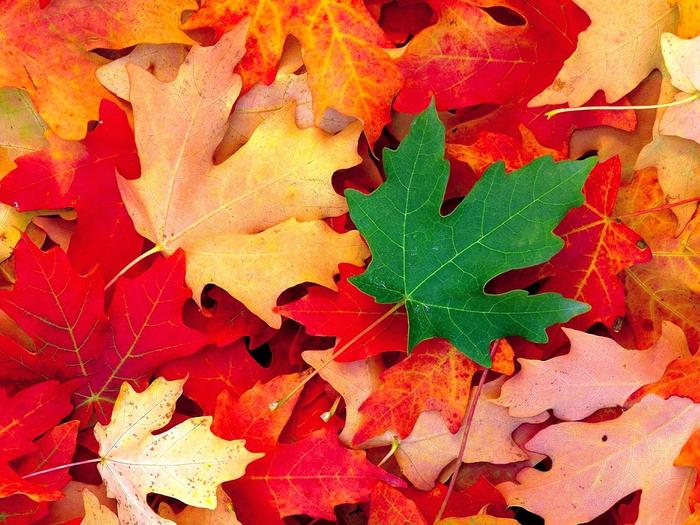 Номер обоя: 238337 Теги к данной картинке: осень, листья Размер обоины...