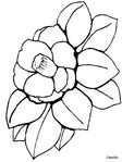 Превью color_camellia.gif (480x640, 115Kb)
