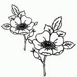 Превью Riscos - Flores (53) (600x600, 116Kb)