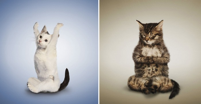 Yoga_Kittens_5 (700x361, 36Kb)