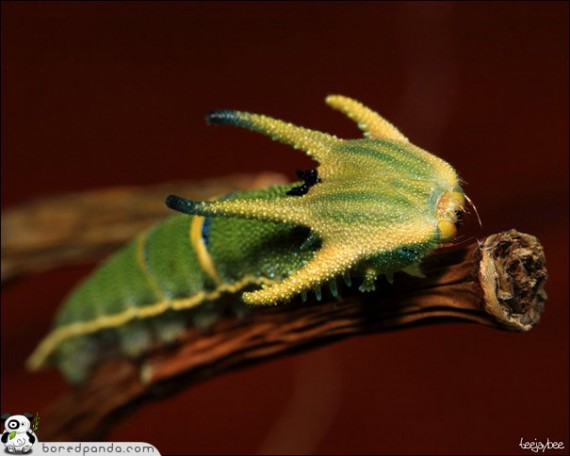 1328202627_caterpillar_01 (570x456, 42Kb)