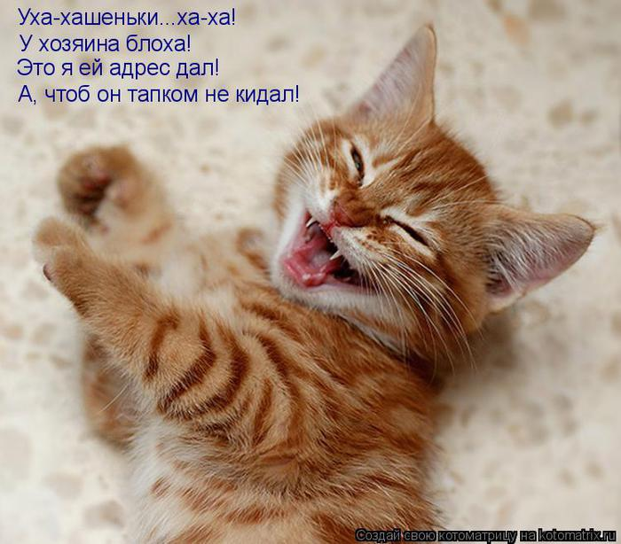 http://img0.liveinternet.ru/images/attach/c/3/83/187/83187774_83090445_KOTOMATRICA_21.jpg