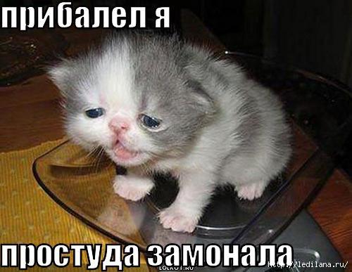 prostuda-zamonala_1296570824 (500x387, 97Kb)