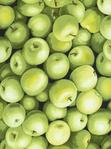 Превью food-c8651-green (500x673, 312Kb)