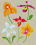 Превью Orchidvari_4379078_2172824 (320x400, 638Kb)