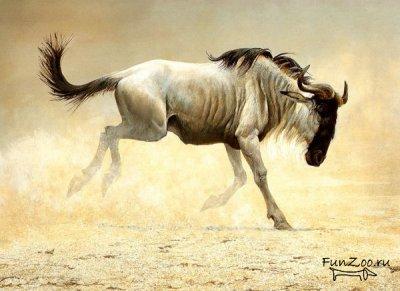 1232045473_safari008 (400x291, 26Kb)