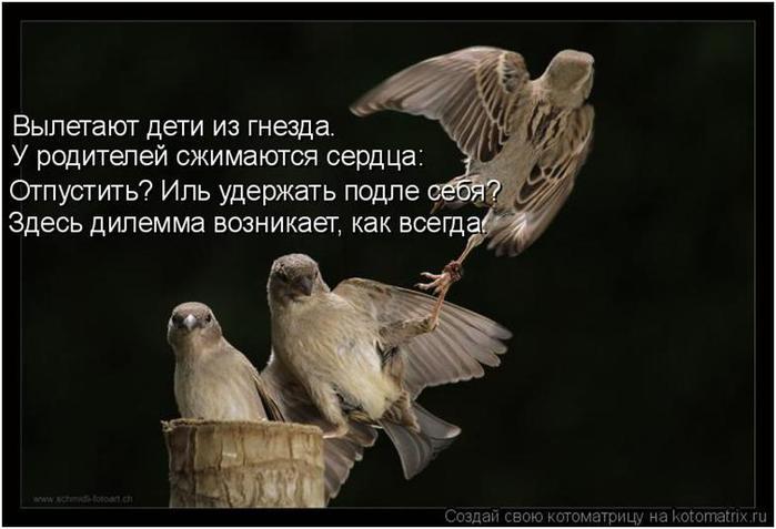 Вы птицу счастья свою не пускайте из рук сказав друг другу люблю