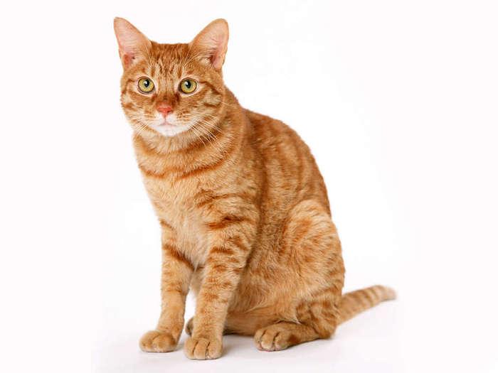 cats_6 _40_ (700x525, 26Kb)