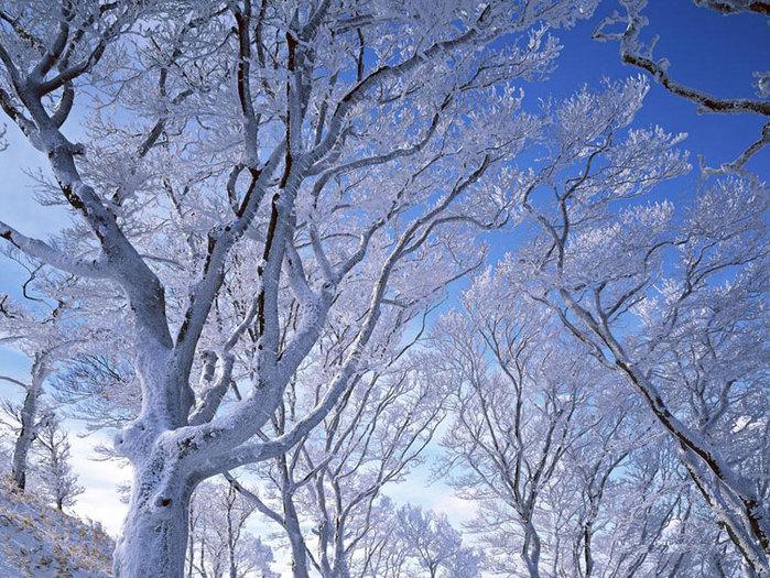деревья во льду/4348076_ledyanoi_dojd_7 (700x525, 174Kb)