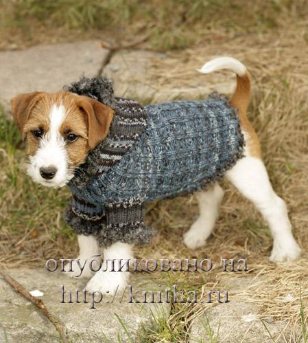 Вязание для собак – еще одно