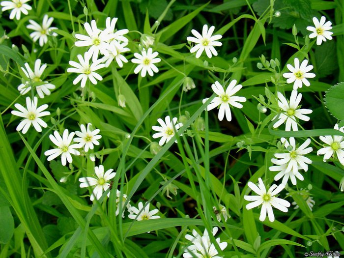 spring_07 (700x525, 106Kb)