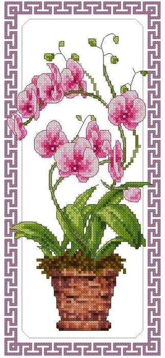 Орхидея вышивка крестом бесплатно