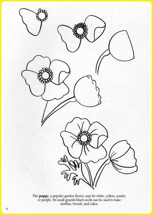 Картинки цветы срисовать 3