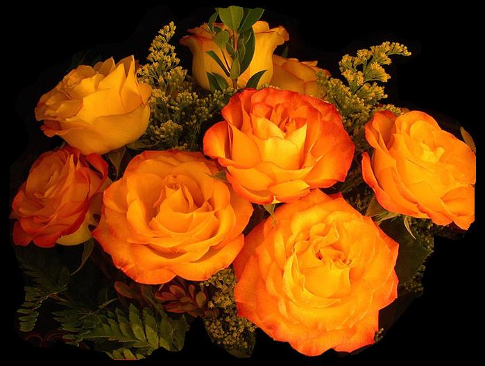 розы (699x528, 553Kb)