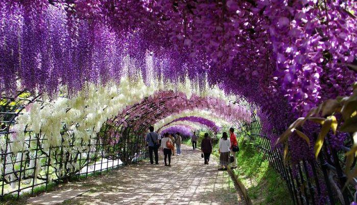 1-Kawachi Fuji Garden (700x401, 96Kb)
