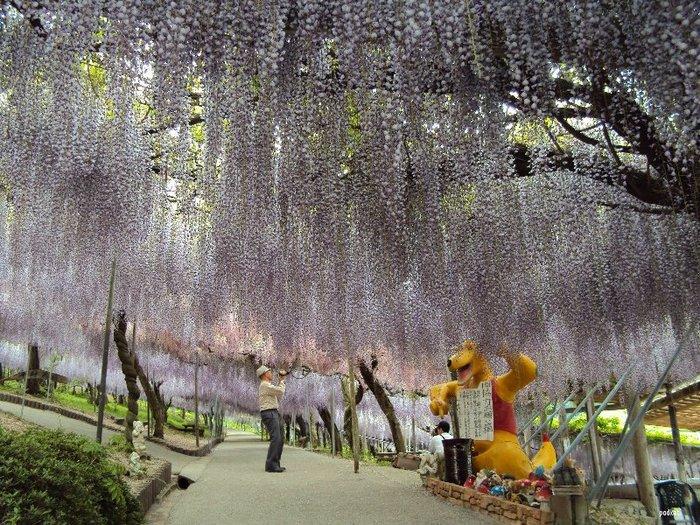 19-Kawachi Fuji Garden (700x525, 160Kb)