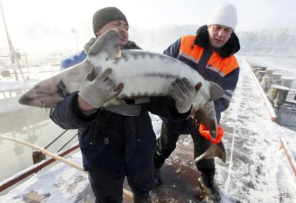 рыбалка хозяйство