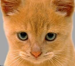 cat (261x230, 18Kb)