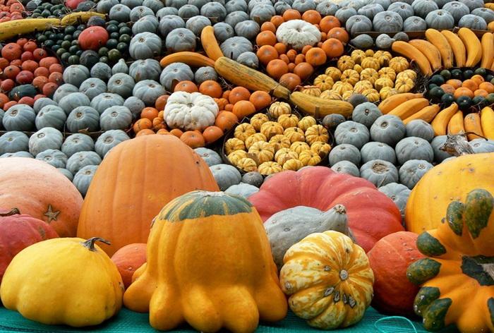slindon-pumpkin-festival-3 (700x472, 173Kb)