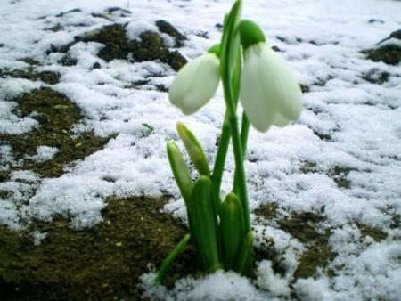 весна (450x338, 53Kb)