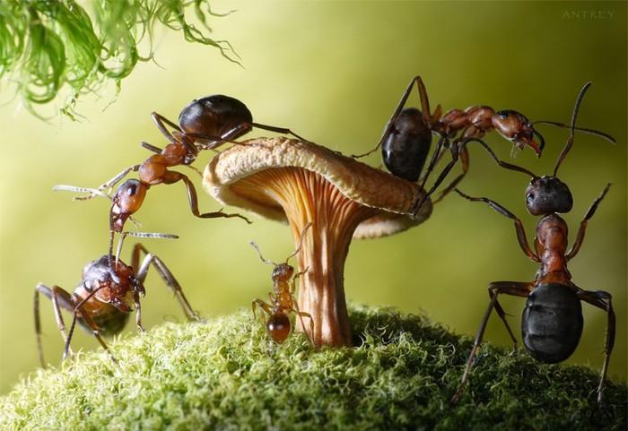 муравьи (700x481, 89Kb)