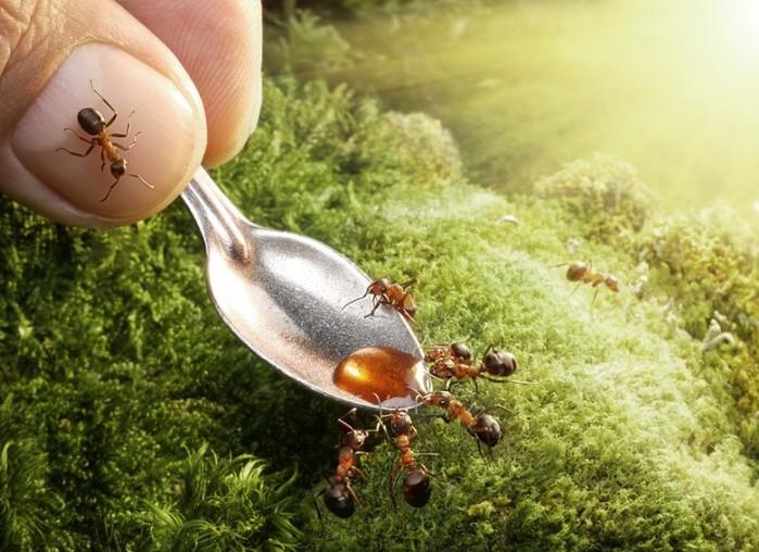муравьи6 (700x508, 107Kb)