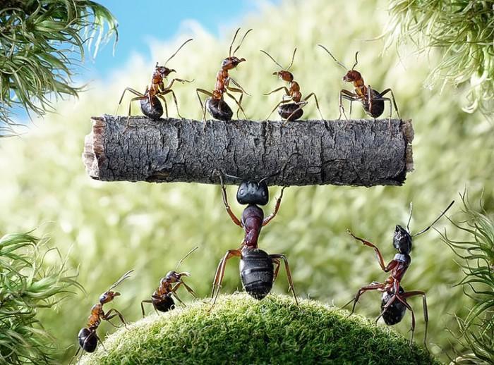 муравьи8 (700x518, 134Kb)