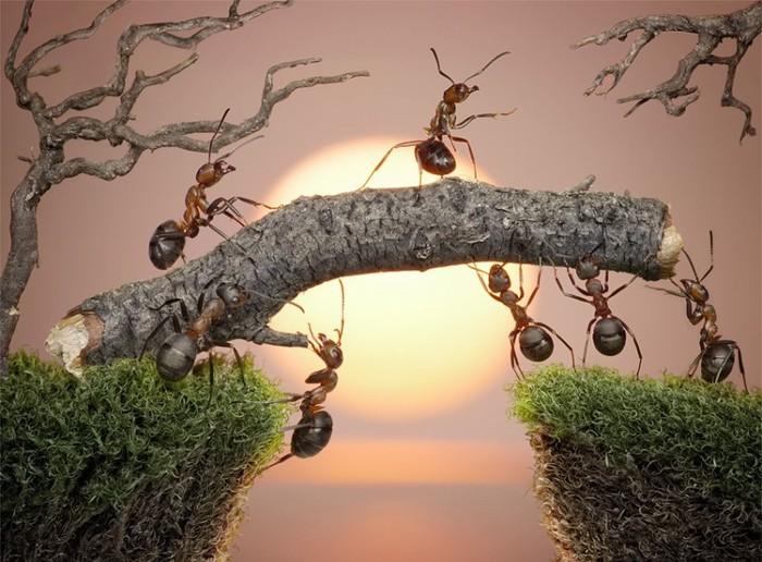 муравьи10 (700x516, 102Kb)