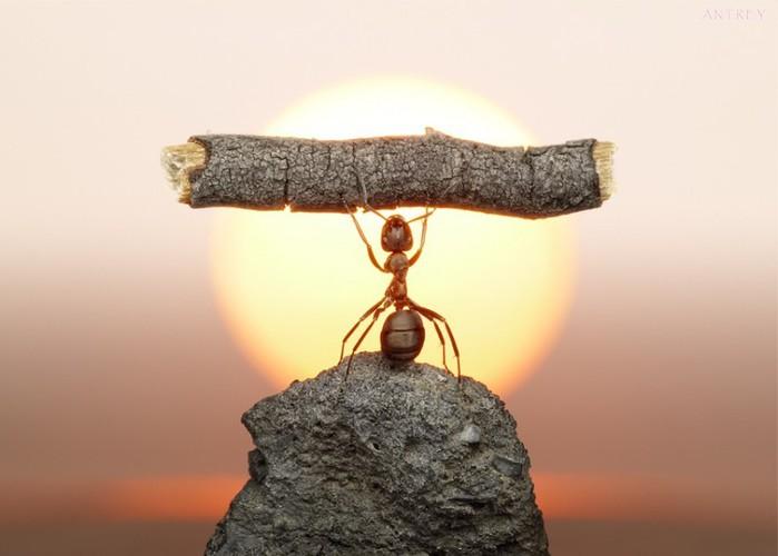 муравьи14 (700x500, 51Kb)