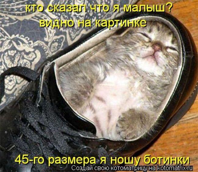kotomatrix_12 (650x563, 81Kb)