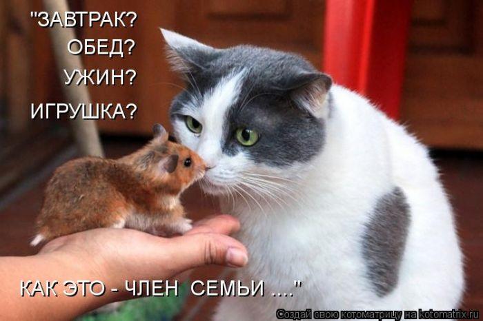 kotomatrix_28 (700x466, 48Kb)