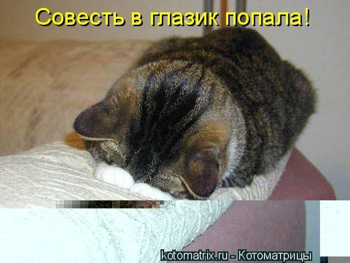 kotomatrix_50 (700x525, 58Kb)