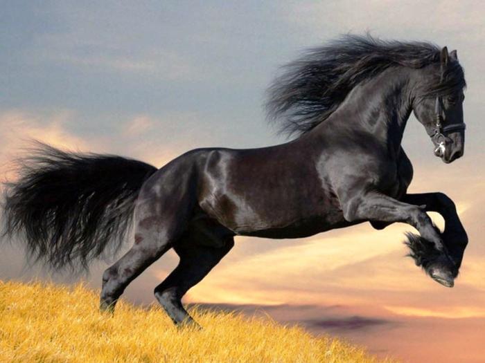 черный конь (700x525, 231Kb)